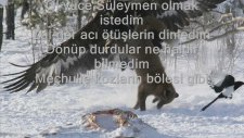 Hikmet Aksu - Kar Altında Kartallar