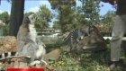 Sevimli Lemurdan Bakıcısına Teşekkür!