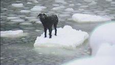 Buzda Mahsur Kalan Köpeği Kurtarmak