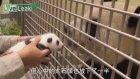 Yavrusunu İlk Kez Gören Panda