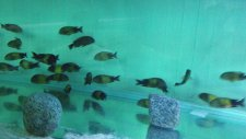Balıklarım 2