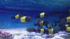 Balıklarım 7