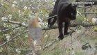 Baykuş İle Kedinin Dostluğu