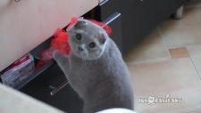 Çekmece Kurcalarken Yakalanan Kedi