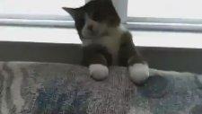 Sahibini Korkutan Kedi