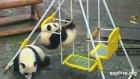 Pandaların Eğlenceli Halleri