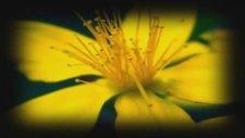 Sordum Sarı Çiçeğe Annen Baban Varmıdır - Ahdevefa 2