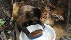 Bulaşık Yıkamada Kadınlara Taş Çıkartan Maymun