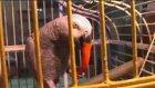 Acı biber ve pirzola yiyen papağan şaşırtıyor