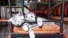Şirin kedilerin uyanma görüntüleri