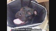 Soruyu Beğenmeyen Köpek