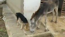 Eşeğin, köpekten intikamı