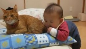 Kedinin Kuyruğunu Isıran Bebek