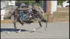 Mekanik Vahşi Kedi Saatte 25 Km Hız Yapıyor