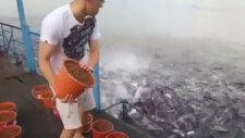 Balık Beslemede Çılgınlık!