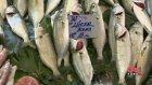 Nedir Bu Slow Fish?