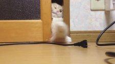 Kedinin Kabloya Uzanma Mücadelesi