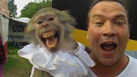 Sahibini taklit eden maymun