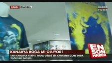 Fenerbahçe'nin Yeni Sembolü Boğa Mı Oluyor?