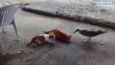 Martı ile kedinin ekmek savaşı