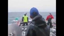 Yok Böyle Bir Balık Avlama Tekniği