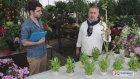 ÇiçekSepeti - Bambu Bakımı Nasıl Olmalı?