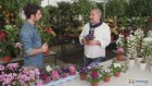 ÇiçekSepeti - Menekşe Bakımı Nasıl Olmalı?