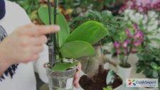 ÇiçekSepeti - Orkide Bakımı Nasıl Yapılmalı?
