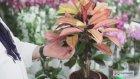 Çiçeksepeti - Saksı Çiçeklerinin Bakımı Nasıl Olmalı?