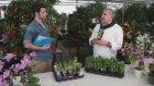 ÇiçekSepeti - Sümbül Bakımı Nasıl Yapılır?