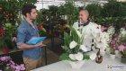 ÇiçekSepeti - Yapay Çiçek Bakımı Nasıl Olmalı?