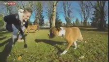 İki ayaklı yavru köpek