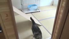Annesiyle Oynayan Tatlı Minik Kedi