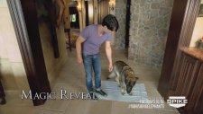 Ünlü Sihirbaz Köpeği Halıya Dönüştürdü (Criss Angel)