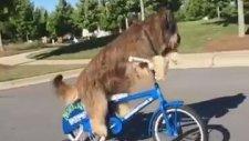 Bisiklet Süren Yetenekli Köpek