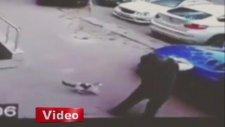 'Kareteci Kedi' Köpeğe Saldırdı