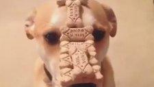 Köpek Eğitiminde Gelinen Son Nokta