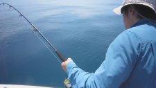 Tuttuğu Balığı Köpek Balığına Kaptırdı