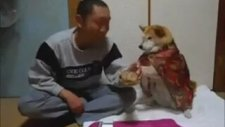 Sahibinin İçki İçmesine İzin Vermeyen Köpek