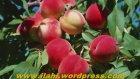 Nevzat Kalyoncu - Cennet Hayatı (Vaaz)