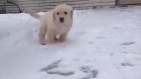 İlk Kez Kar Gören Yavru Köpek