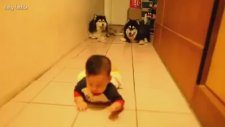 Emekleyen Bebeği Taklit Eden Köpekler