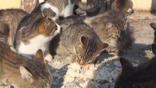 Sokak kedilerini ıslıkla çağırıp balıkla besliyor