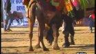 Kültür Kervanı - Belenbaşı Deve Güreşleri Şenliği 4.bölüm