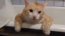 Küvetten Çıkamayan Şişman Kedi