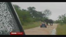 Öfkeli Fil Arabadaki Turistlere Saldırdı