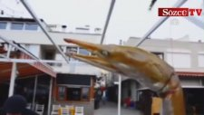 Dikenli Yılan Balığı Yakalandı