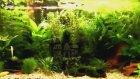 145 Litre Bitkili Tropikal Tatlısu Balık Akvaryumu