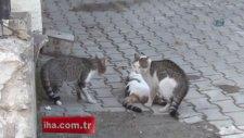 Kediden İnsanlık Dersi