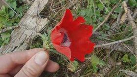 Gülden Karaböcek - Dumanlı Dumanlı Oy Bizim Eller